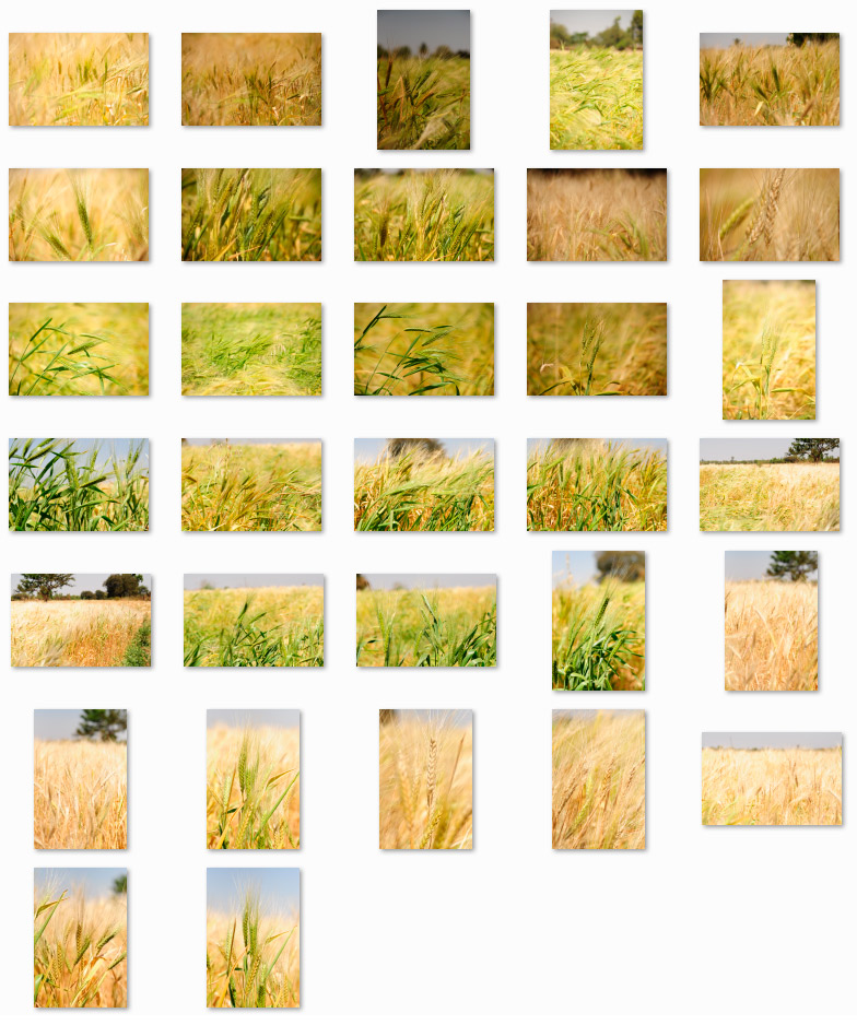 high quality stock photos - griu-image
