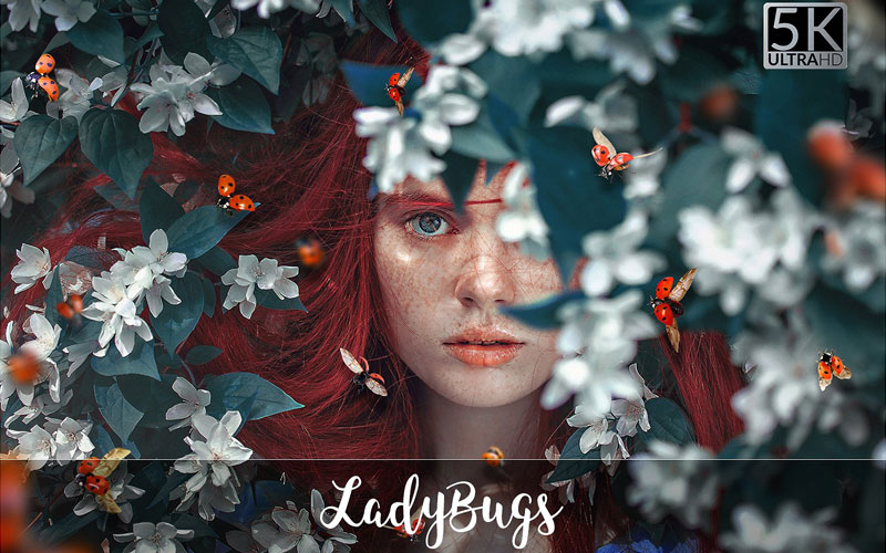 Magnificent Overlays - Ladybugs